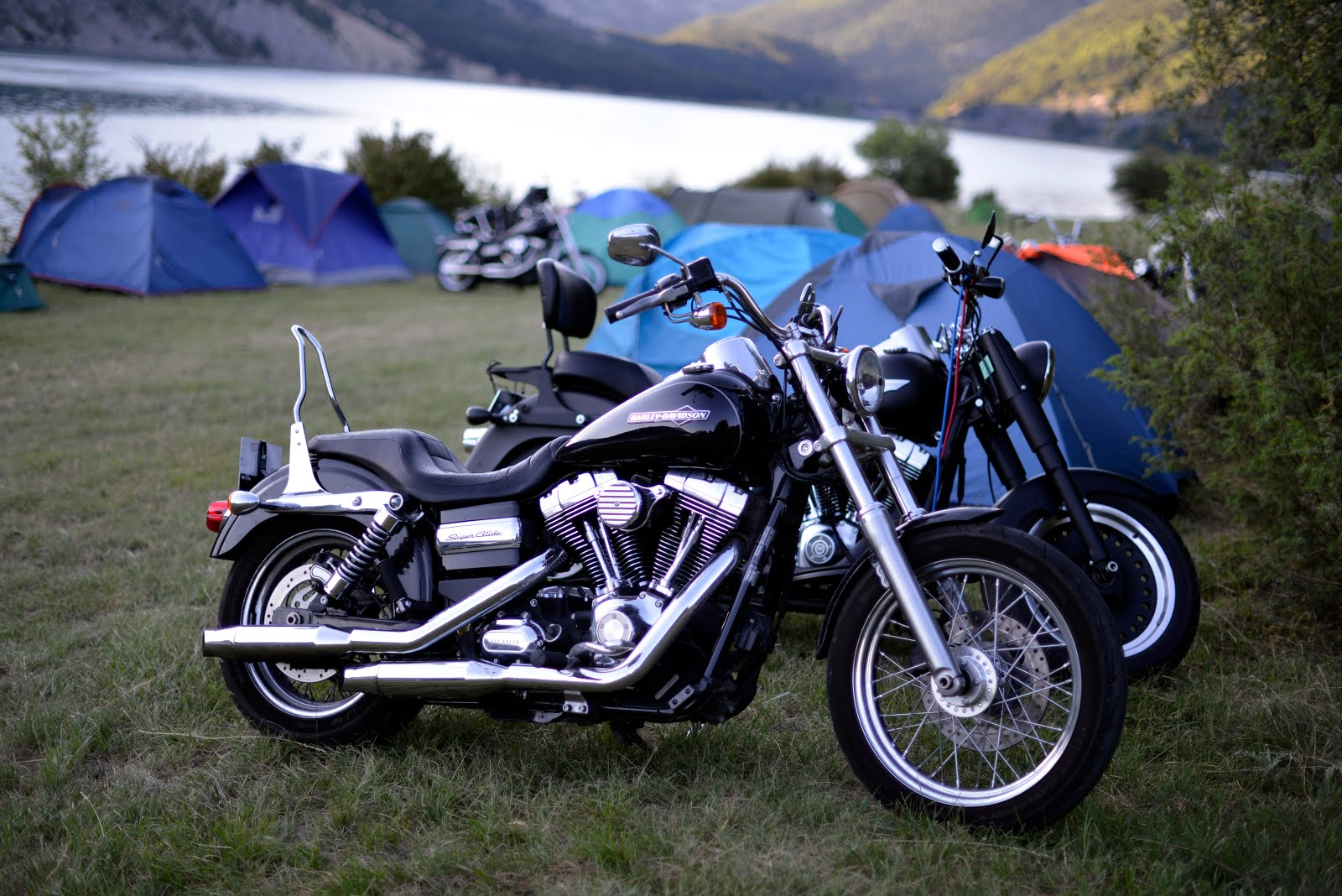 Harley FX
