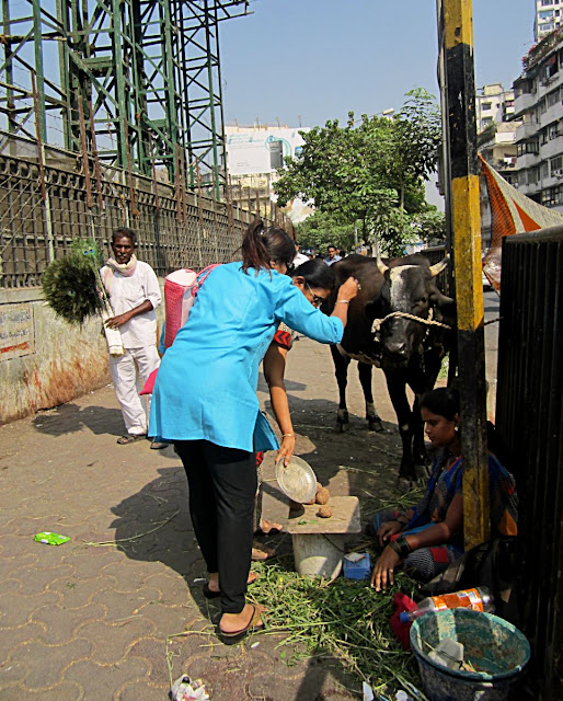 people paying respects to a cow