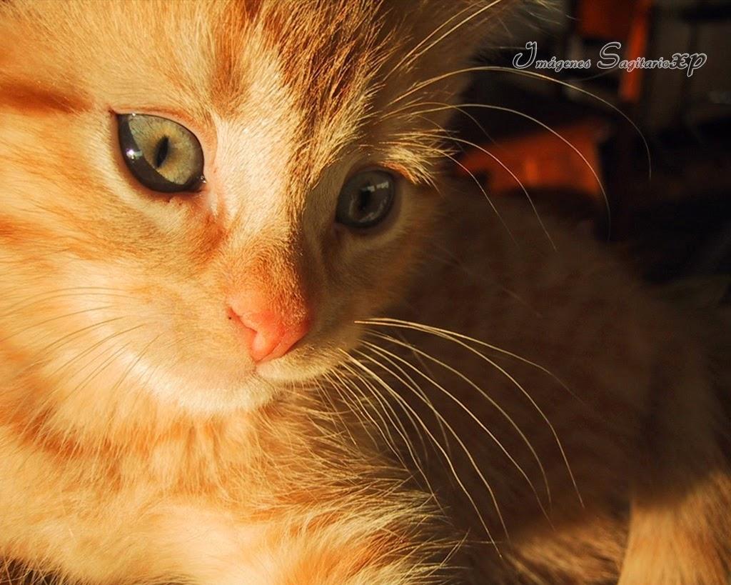 bonito-gatito-amarillo-rallado.jpg