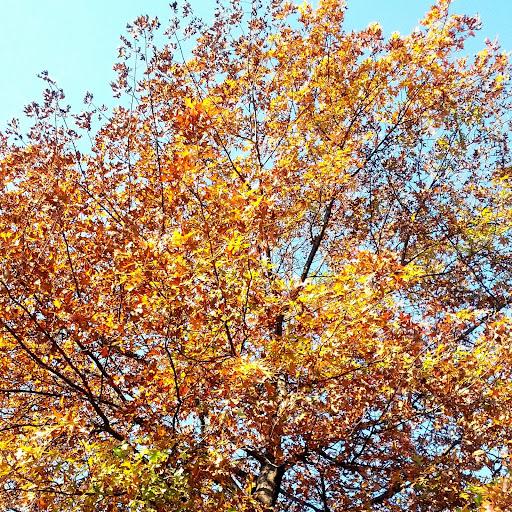 Fall-Foliage-Bethlehem-PA-tasteasyougo.com