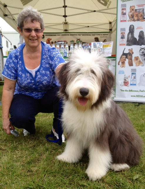 How To Groom A Bearded Collie Hiro Dog Lover
