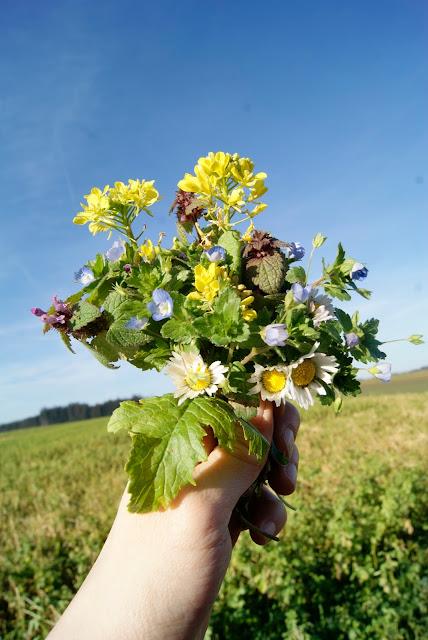 Büschelschön, Frühling, Gamander-Ehrenprei, Gänseblümchen, Rapsblüten, rote Taubnesseln