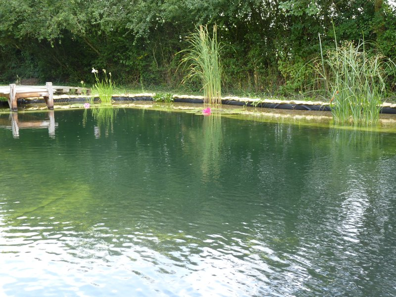 Bassin de baignade naturelle en autoconstruction un an for Autoconstruction piscine naturelle