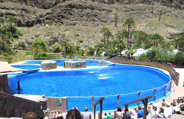 dolphinarium palmitos park gran canaria