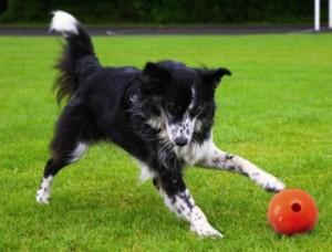 Conoscere cesar millan esercizio disciplina affetto - Portare il cane al canile ...