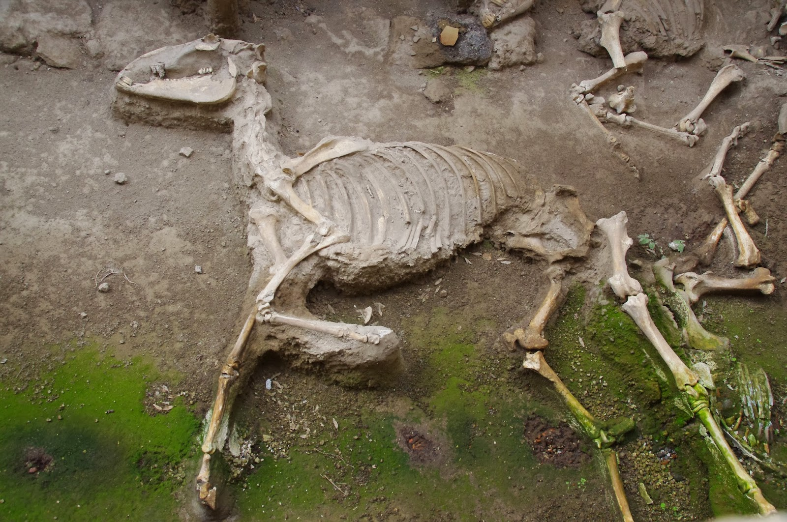 pompeii a victim of vesuvius fury When mount vesuvius erupted 2,000 years ago, its victims were caught fleeing from its fury except for one soldier - his skeleton was found facing the volcano the eruption of mount vesuvius.