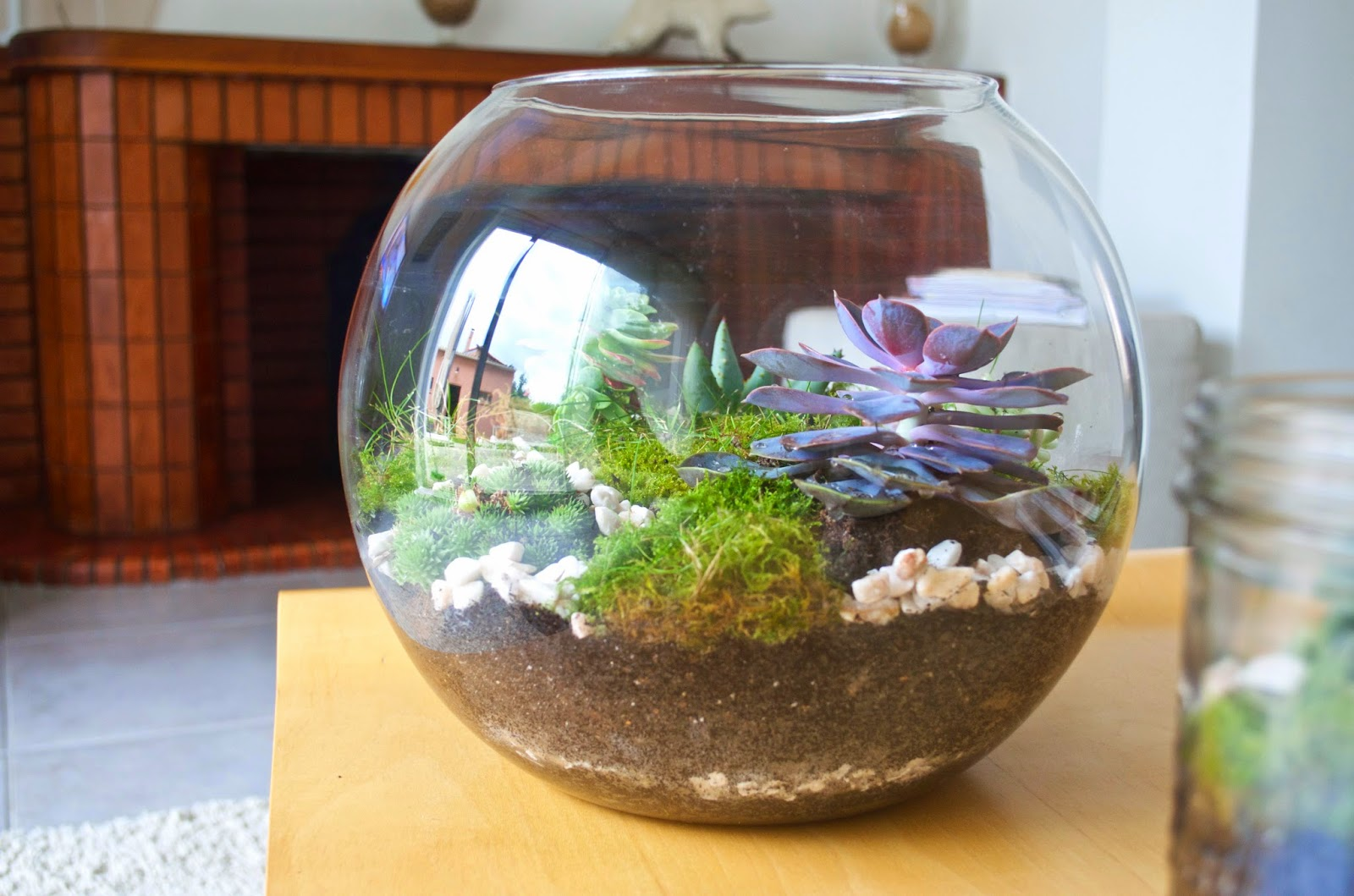 diy le terrarium. Black Bedroom Furniture Sets. Home Design Ideas