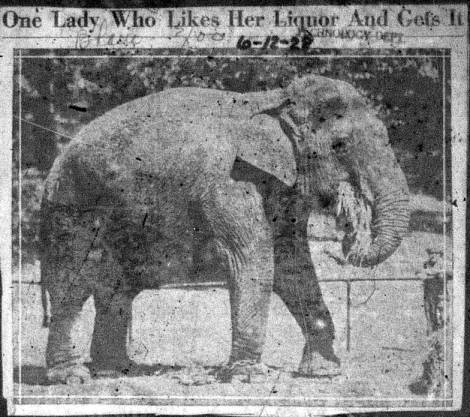 Miss Fancy newspaper clipping image