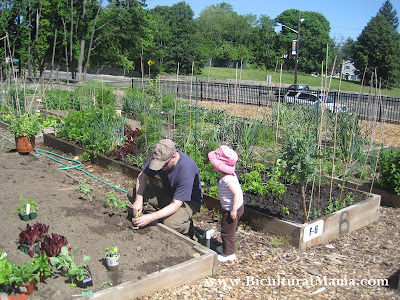 Our Own Organic Garden Plot In A Community Garden
