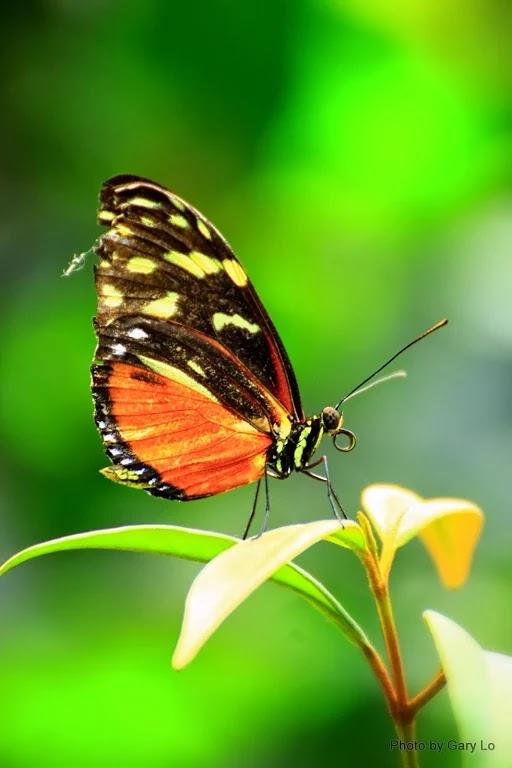 Kelebek Ucar Yazı Kalır