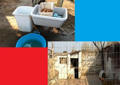 Lager in un abitazione privata rinvenuti cani gatti e for I gatti mangiano le tartarughe