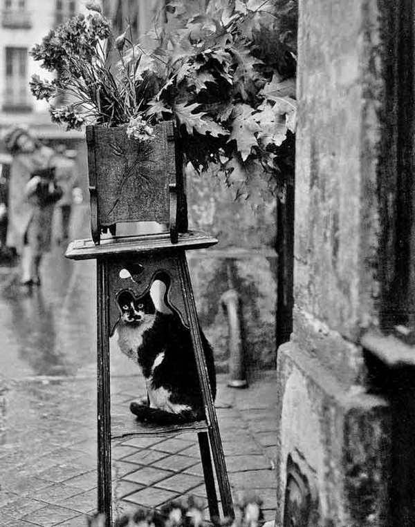 chat de la fleuriste