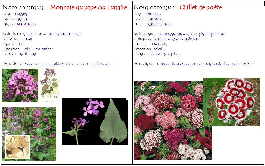 Polyculturevert les plantes bisannuelles for Liste plantes