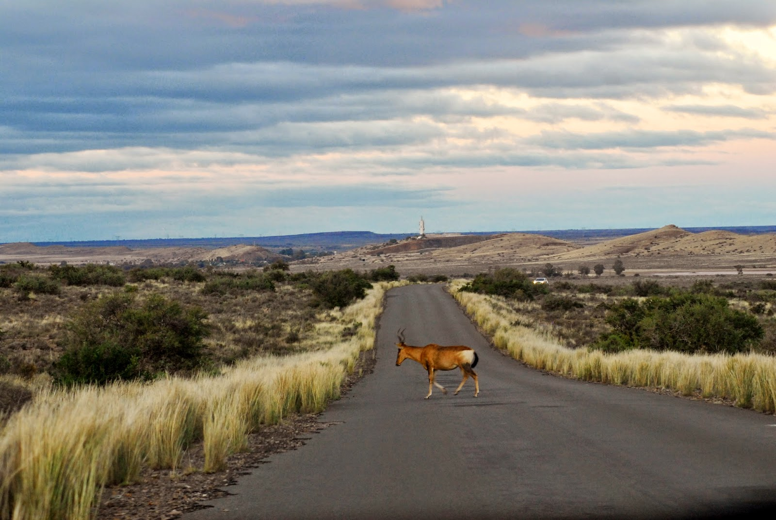 The Great Wildebeest Migration The Great Karoo