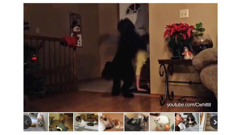 Pets interrupting yoga