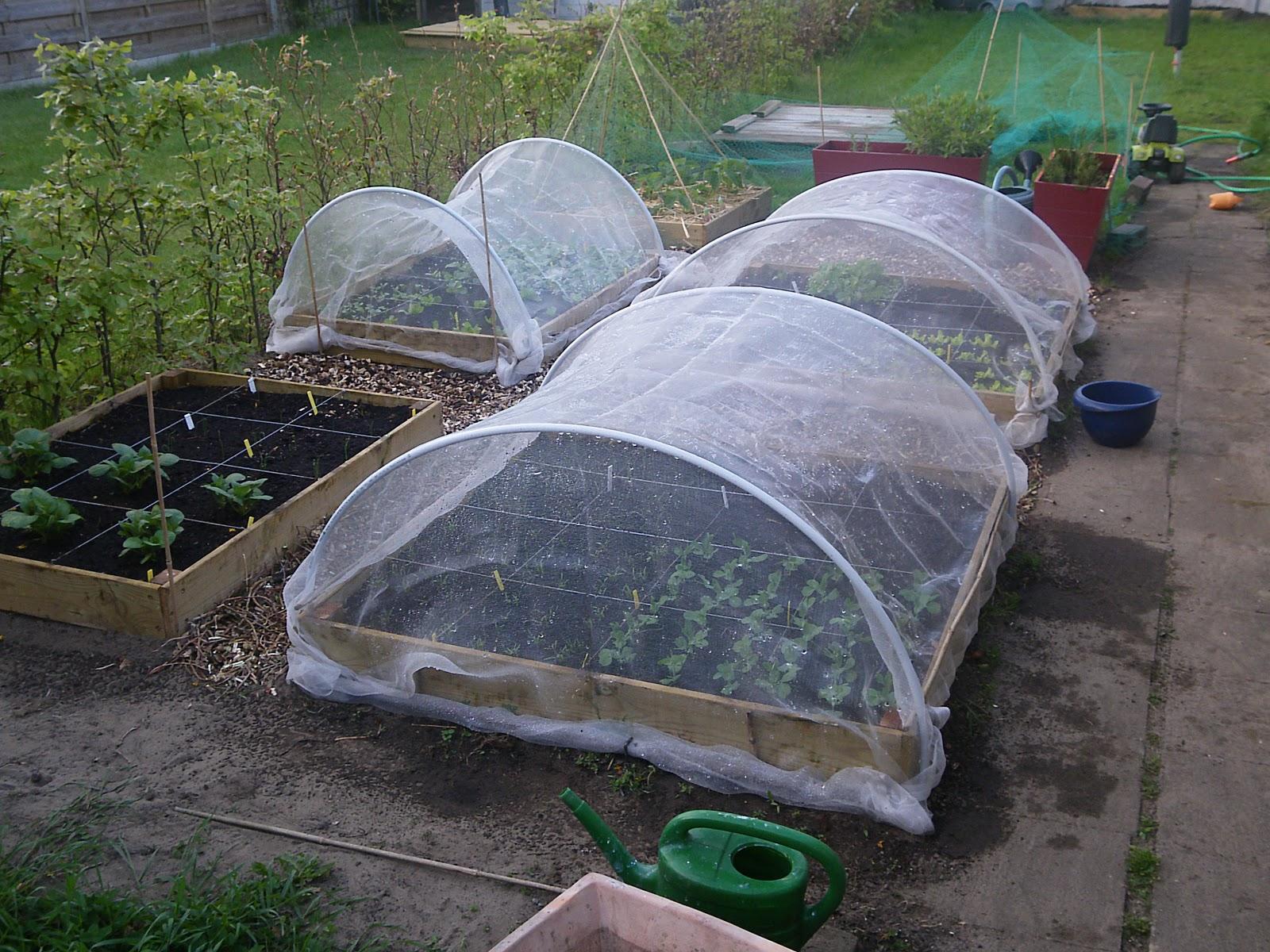 Vierkante Meter Tuin : De vierkante meter moestuin groeit en bloeit moestuin