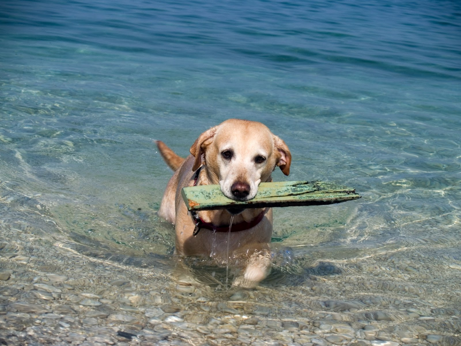 Dartmouth Dog Friendly Beaches