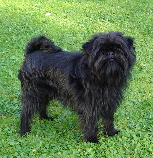 Dog Breeds: Dog Breeds