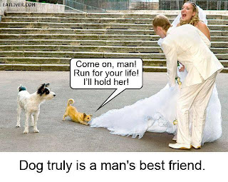 funny dog attack on bridal