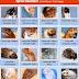 Tips dan Trik Menyilangkan Hamster untuk Pemula