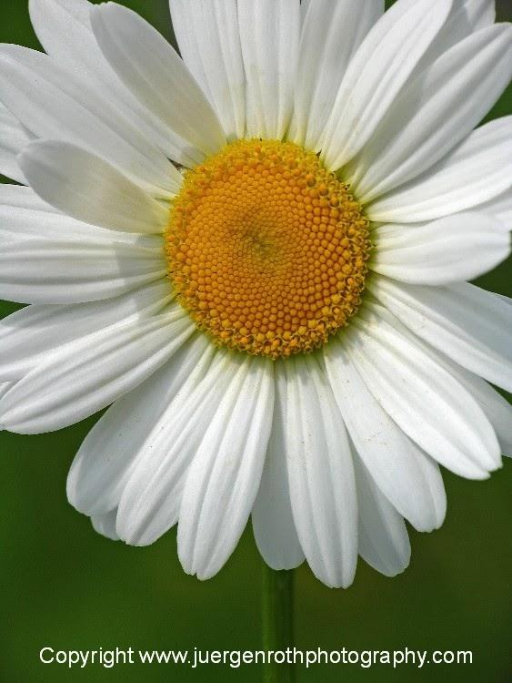 http://juergen-roth.artistwebsites.com/art/all/flowers/all