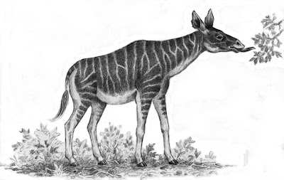 griaffidae extinta Helladotherium