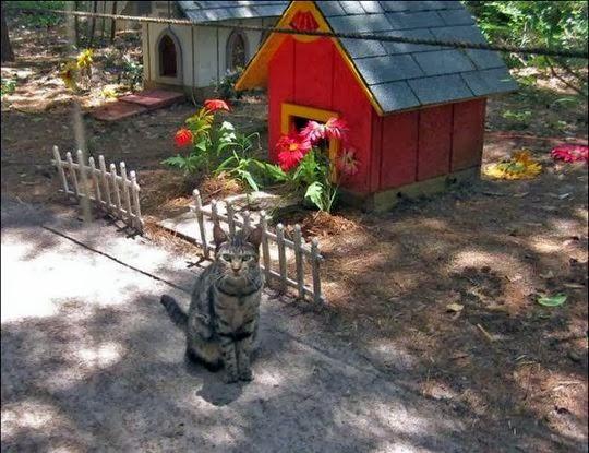 Caboodle Ranch Cat Sanctuary