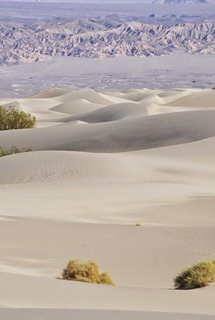 Mesquite Dunes 094