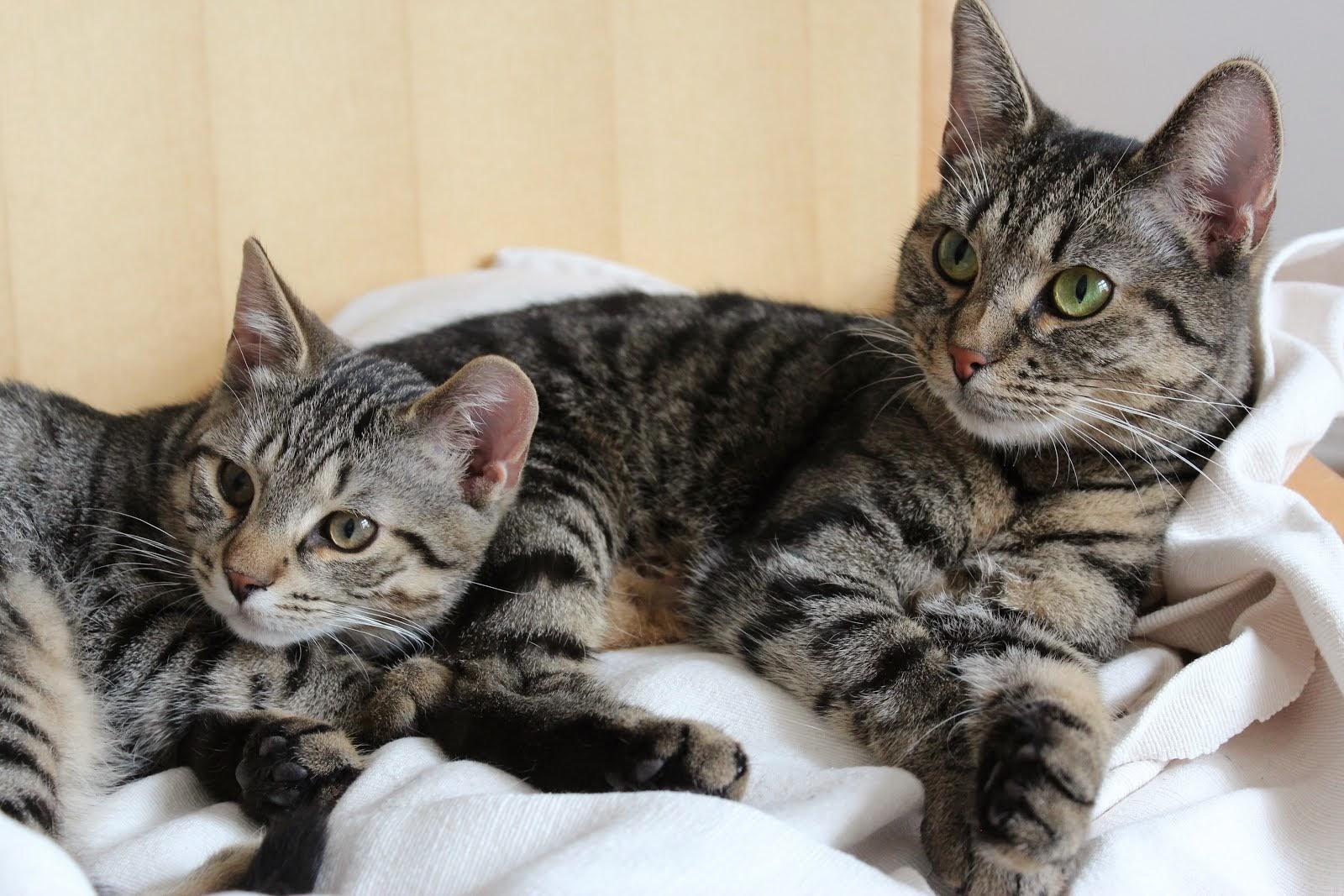 Sulo ja Mesi-mamma