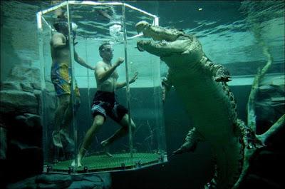 Menyelam bersama buaya