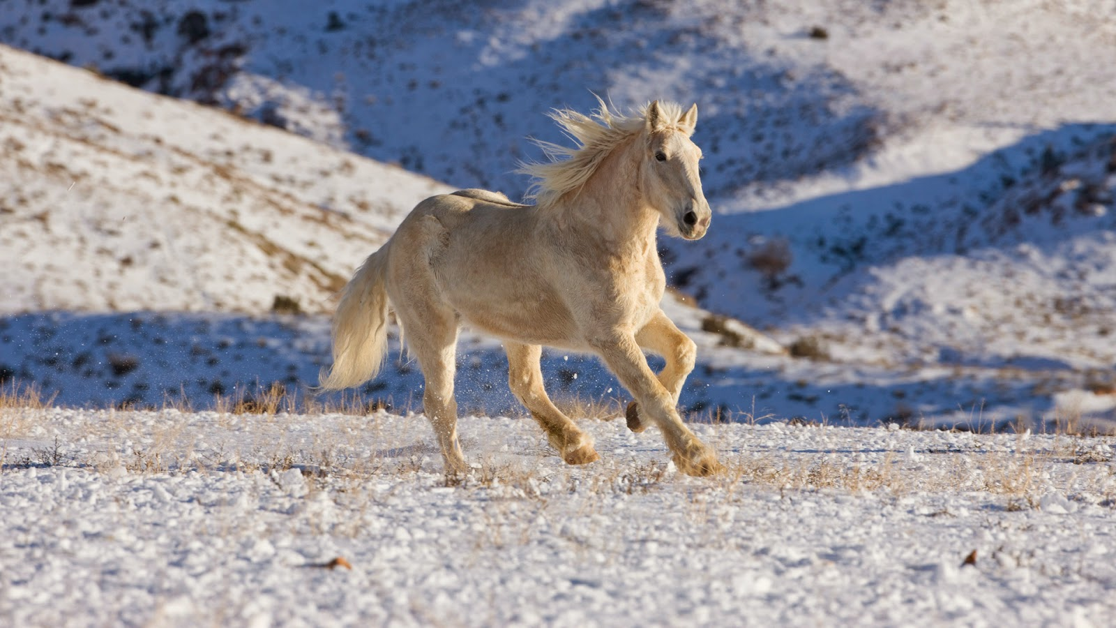 Good   Wallpaper Horse Desert - wxp%2B(4)  Pictures_91981.jpg