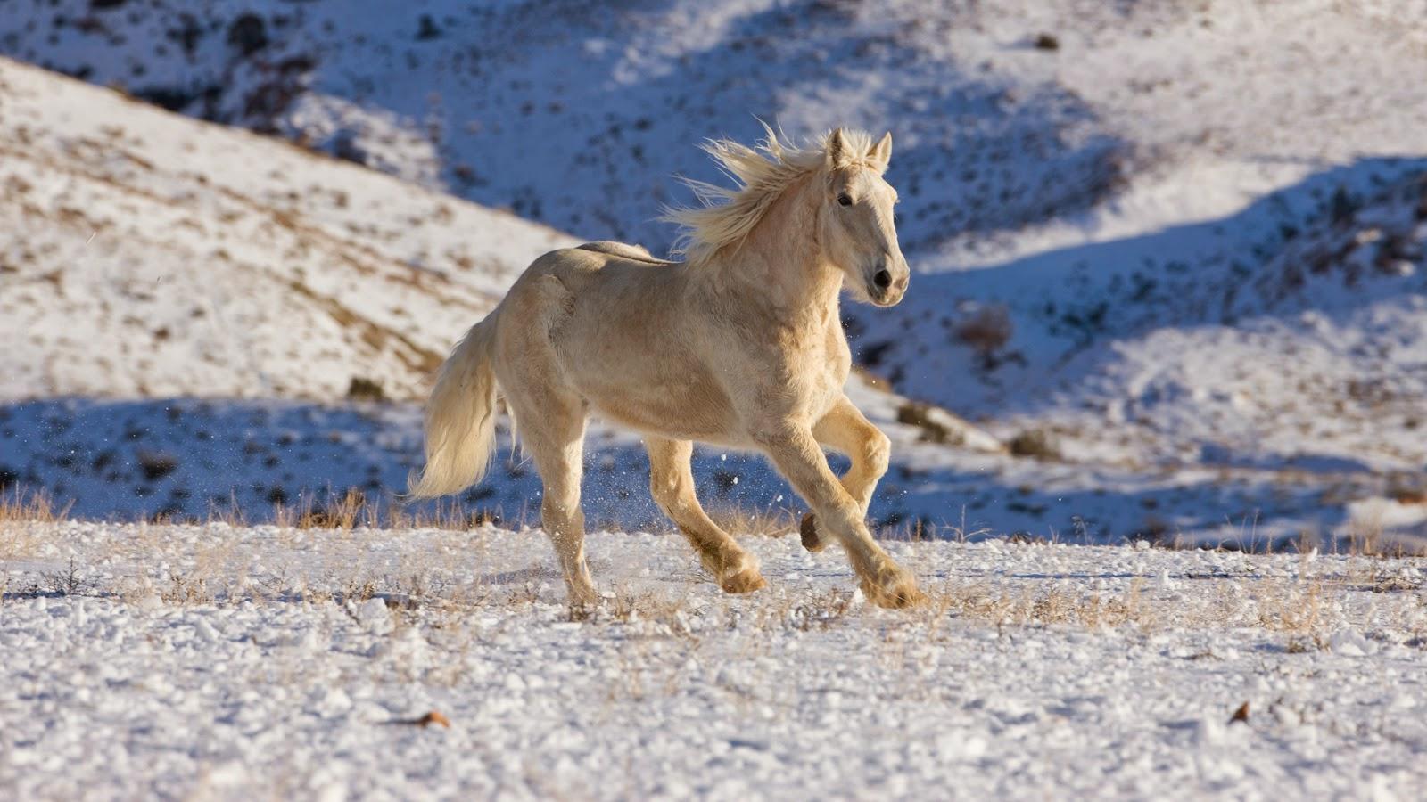 зимняя лошадь обои на рабочий стол № 511107  скачать