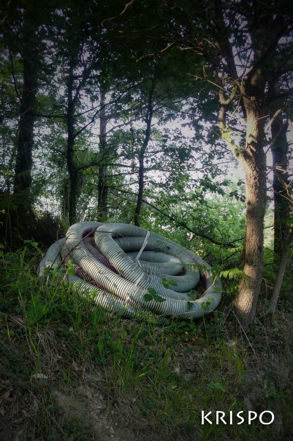 cable corrugado parecido a un gusano en el bosque