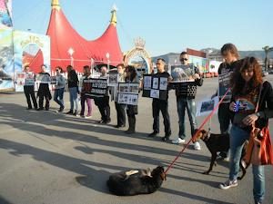 Agresión a los activistas animalistas en Murcia: (10-3-2012)