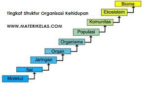 Struktur Tingkat Organisasi Kehidupan (Molekul, Sel, Jaringan, Organ, Individu, Populasi, Ekosistem, dan Bioma)