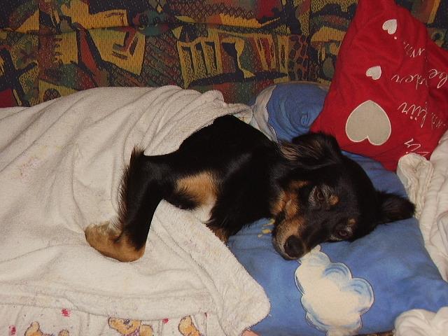 unsere haustiere schonkost f r hunde selber zubereiten magen darm beschwerden. Black Bedroom Furniture Sets. Home Design Ideas