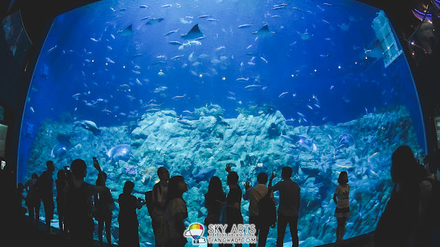 I can spend half day by just looking at this aquarium in HK Ocean Park
