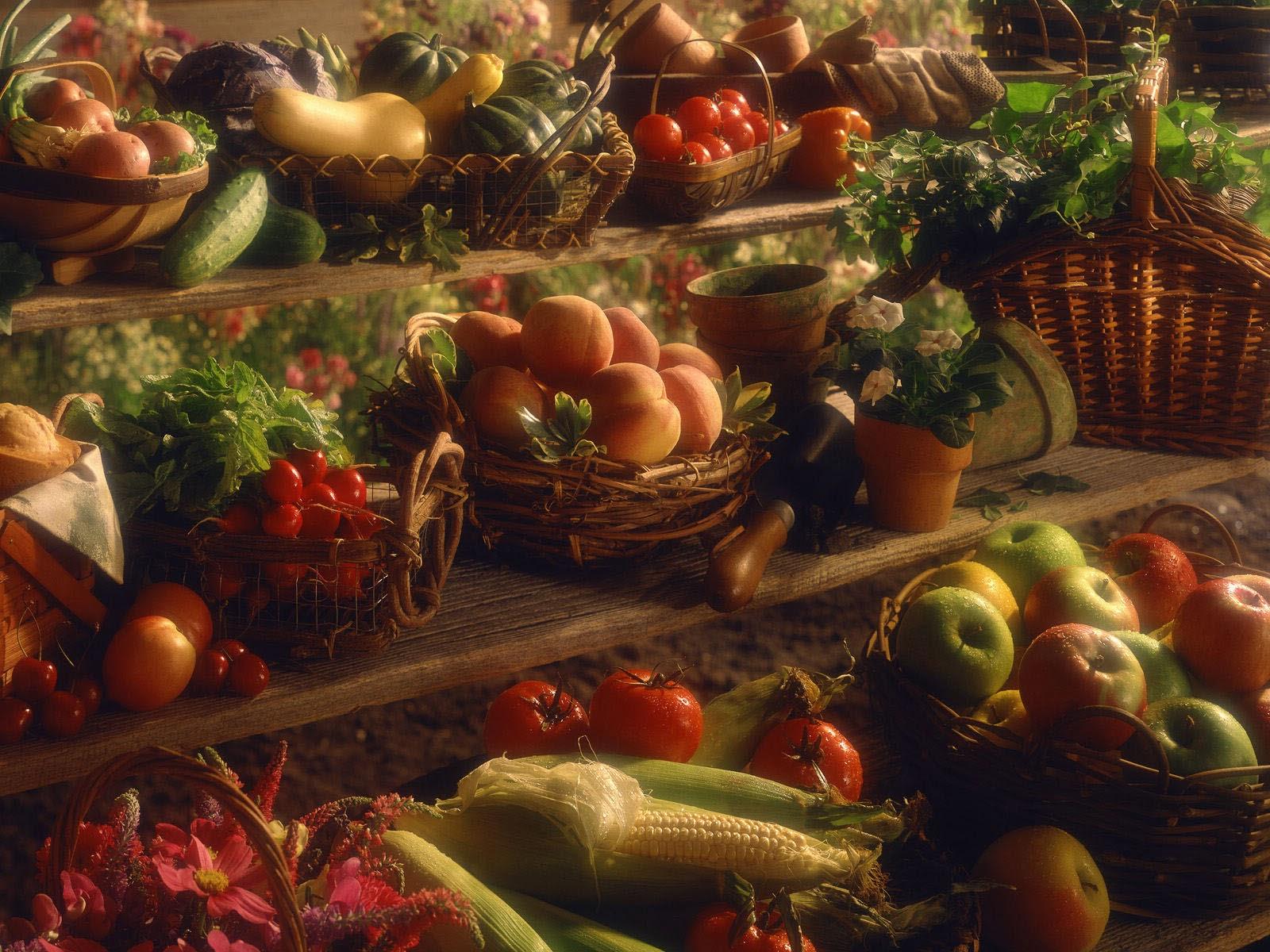 BANCO DE IMÁGENES: 28 imágenes sobre el Día de Acción de Gracias o ...