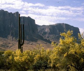 Saguaro in Arizona