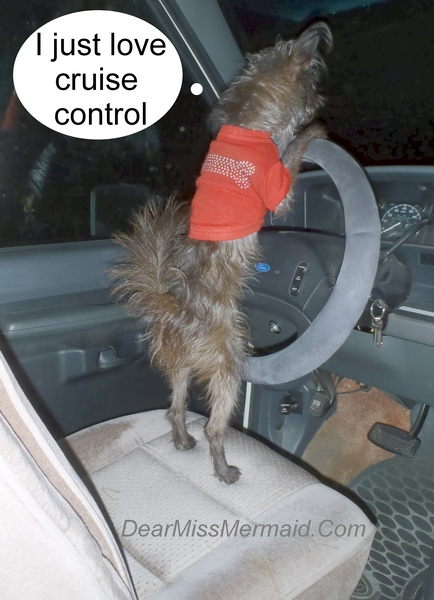 how to drive an RV with cruise control http://dearmissmermaid.com photo copyright by dear miss mermaid