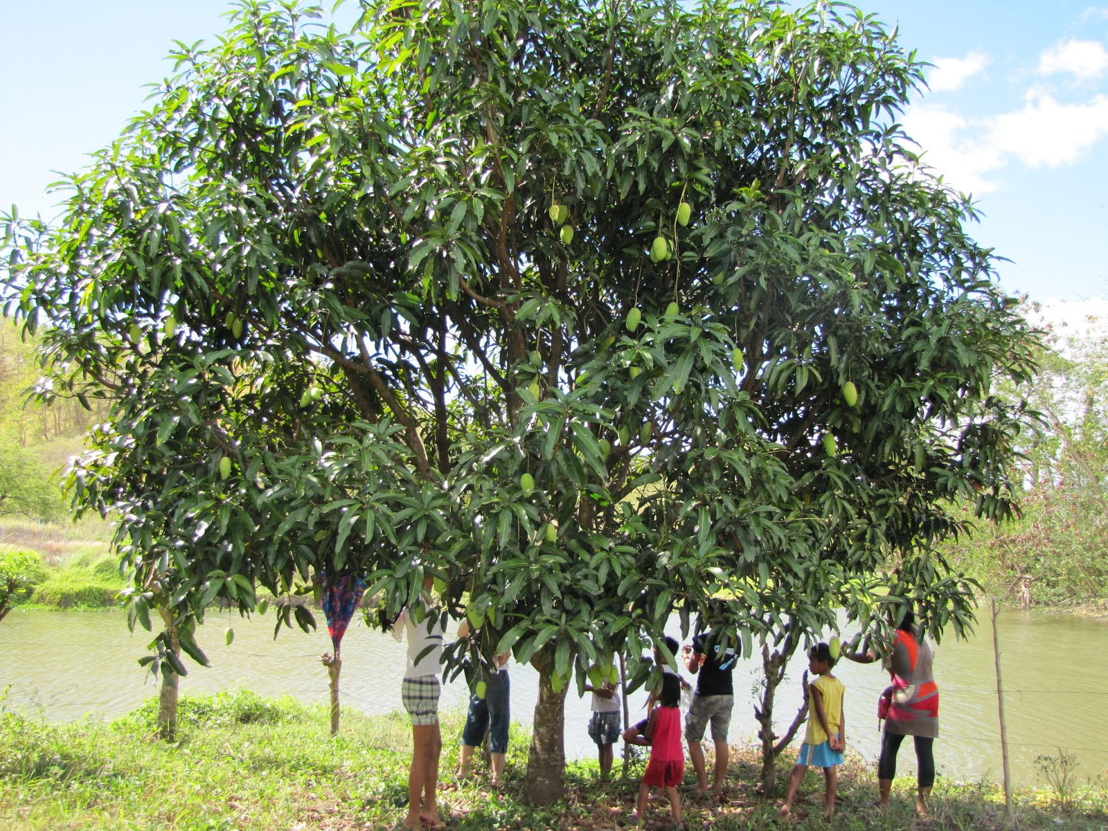 Enjoy The Shade Of A Mango Tree With Us The Fish Pond In The Back Is Also  On Bro Lando's Land And Sometimes Supplies Fish For Their Suppers