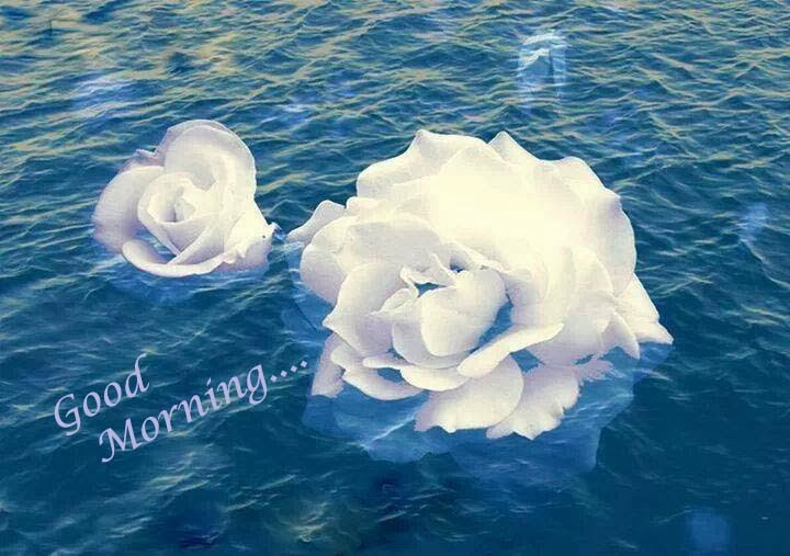 good morning with white rose image