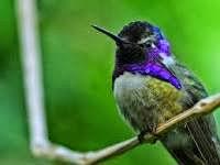 Algoritma Hummingbird Google
