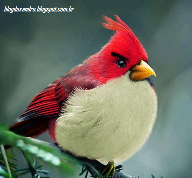 Angry+Birds+REAL.png (634×590)