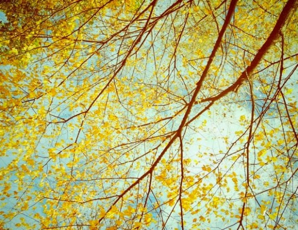 Golden Autumn ~ Lily Shih Photography #autumn #leaves