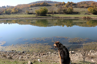 Rambo staring at the lovely still lake