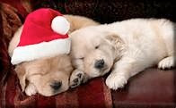 Sleepy Puppies Christmas