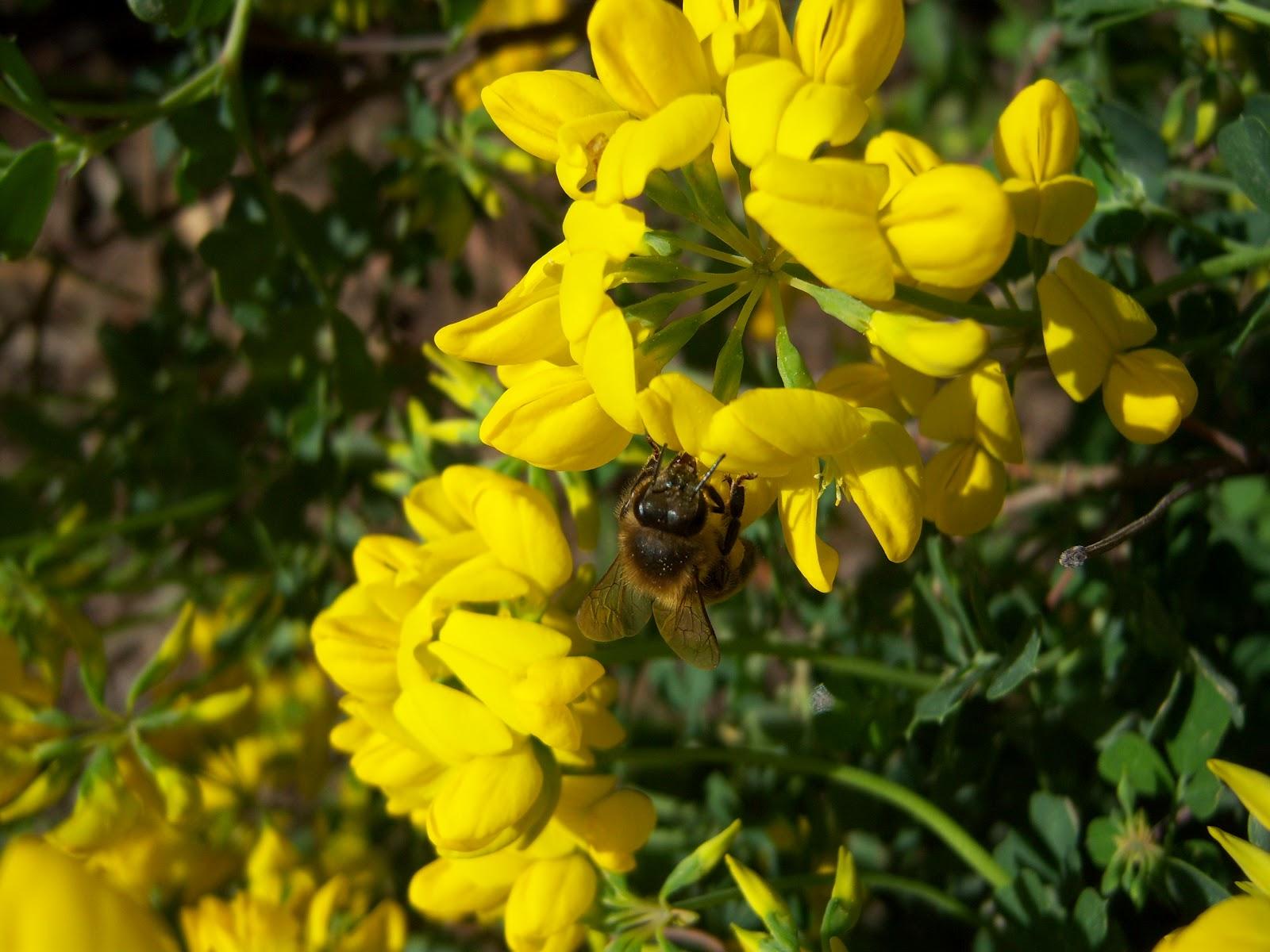 Abejas mel feras bot nic serrat for Ahuyentar abejas jardin
