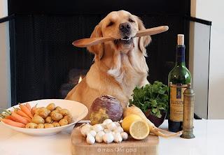 ração cão