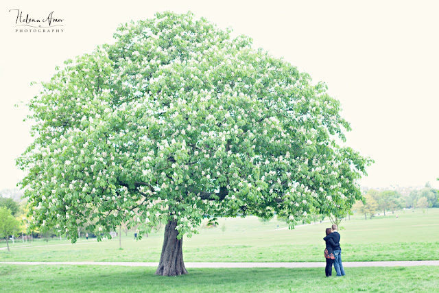 engaged couple underneath a tree